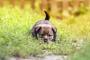 Infección viral intestinal (rotavirus) en perros