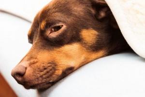 ¿Pueden los perros comer almendras?