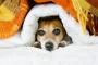 ¿Los perros tienen resfriados? Todo lo que necesitas saber