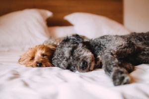 El lenguaje detrás de las posiciones para dormir de los perros (reseña informativa)