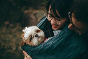 ¿Cuándo es un perro adulto? (Respuestas específicas de raza!)