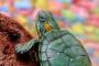 Seleccionando un reptil como mascota