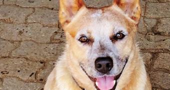 Cómo mantener la sonrisa de su perro de color blanco nieve