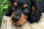 Las primeras 5 cosas para enseñar a tu nuevo cachorro (y cuándo comenzar)