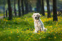 Trismo en perros