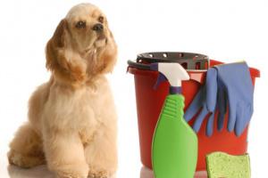 Productos de limpieza seguros para mascotas.