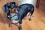 Cáncer canino: hiperadrenocorticismo