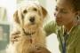 Hidralazina para perros: usos, dosis y efectos secundarios.