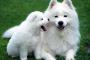 Vómito agudo en perros