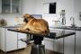 Imodium para perros: usos, dosis y efectos secundarios.