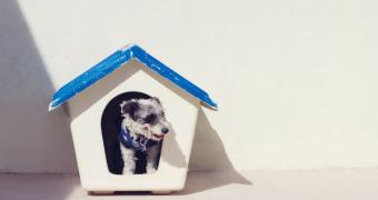 Signos y síntomas de hinchazón en los perros
