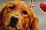 Ritmo cardíaco gravemente anormal en los perros