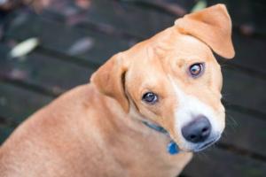 3 comandos que su perro necesita saber antes de la visita de los invitados.