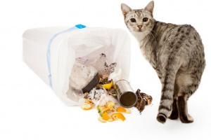 Comportamiento Destructivo en Gatos