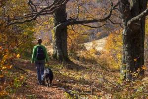 7 cosas divertidas para hacer con tu perro este otoño.