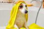 Enfermedad renal en perros