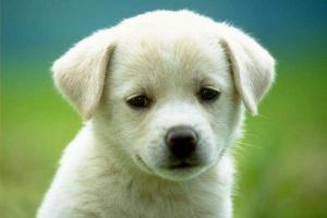 Qué darle a un cachorro con diarrea
