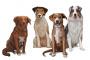 Los beneficios del aceite de linaza para perro