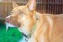 Otitis media y otitis interna en perros