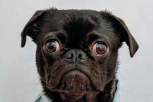 La ansiedad por separación en los perros