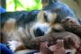 5 Hacks simples para hacer la vida más fácil para perros mayores