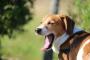 5 razones por las que los perros bostezan cuando no están cansados.