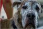 5 causas de pérdida de cabello en perros