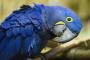 TOP 5 especies de ave amigables que son buenas mascotas