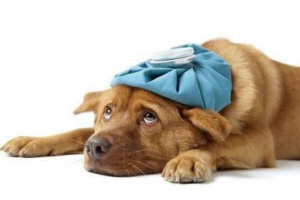 Convulsiones en los perros