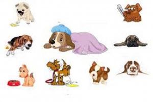Cáncer de boca (condrosarcoma) en perros