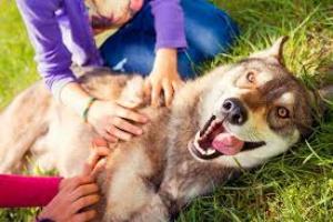 Cáncer de boca (Fibrosarcoma gingival) en perros