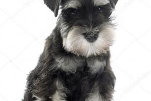 Degeneración de células cerebrales en perros