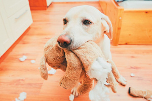 Qué hacer para detener la masticación de perros