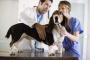 Los 5 mejores pasos para elegir un buen veterinario.