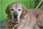6 maneras de hacer la vida más fácil en tu perro mayor