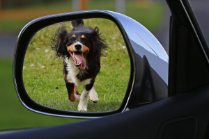 Cómo ayudar a un perro callejero