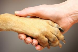Reconociendo y tratando el dolor en su mascota