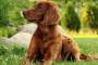Infección fúngica (rinosporidiosis) en perros