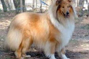 Signos de buena piel y abrigo en un perro saludable
