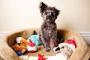 Qué hacer si tu perro no comparte sus juguetes
