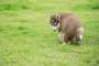 Mucus en Taburete para perros