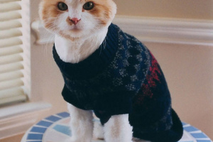 Suéteres para gatos
