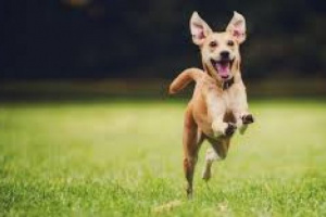 Apoye a su perro con actividades al aire libre y en el interior