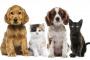 Prevalencia de parásitos: ¿cuál es el riesgo de su mascota?