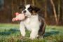 Crecimiento en perros: qué esperar