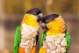 5 especies de aves menos conocidas que son buenas mascotas