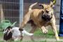 Años de perro a los años humanos: una ciencia inexacta