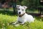 Síndrome de Key-Gaskell en perros