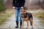 Comandos críticos para salvar la vida de su perro.