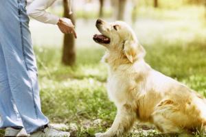 3 consejos simples para entrenar a tu cachorro.